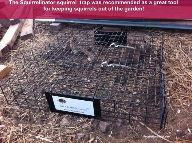 The Squirrelinator cage squirrel trap