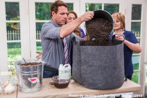 growing garlic in container home and family show shirley bovshow