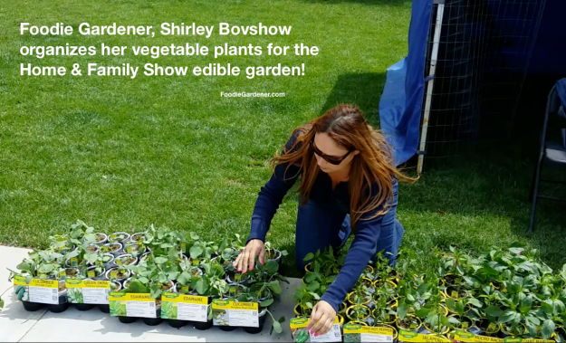 foodie gardener shirley bovshow organizes her vegetable plants for the home and family show edible garden