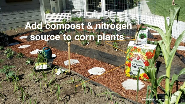 soil building gardner and bloome compost and blood meal soil ammendments for growing corn in small garden foodie gardener