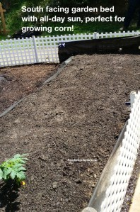south facing all day sun garden bed for growing corn foodie gardener