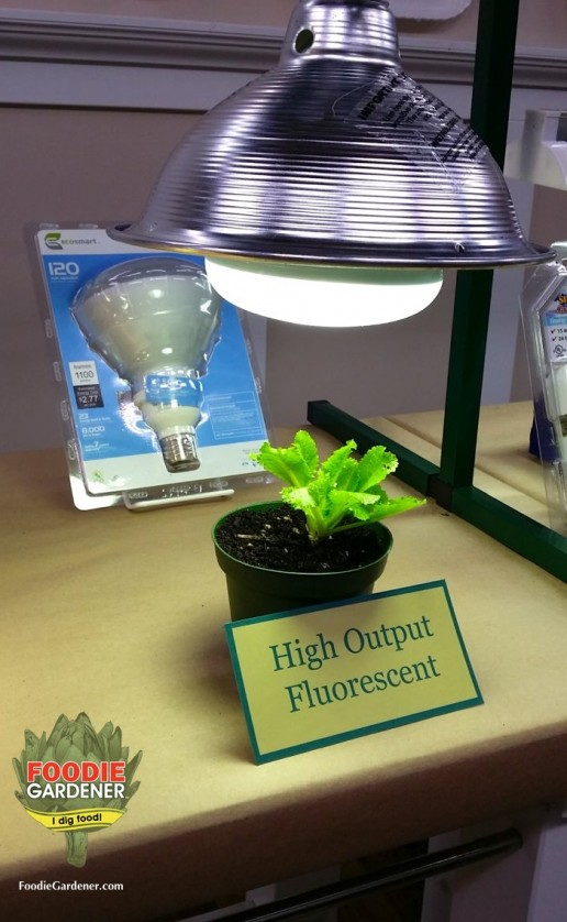 high output compact fluorescent light bulb HO fluorescent grow light lettuce foodie gardener blog