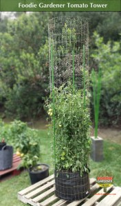 foodie gardener tall metal tomato tower support cage on pallet foodie gardener blog