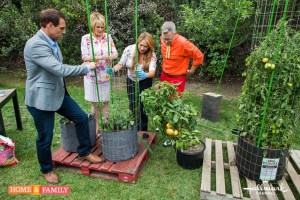 shirley bovshow foodie gardener builds tomato tower support cage with mark steines cristina ferrare home and family show hallmark channel.