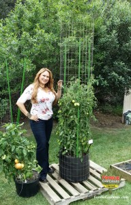 shirley bovshow landscape edible garden designer tall tomato tower metal support cage foodie gardener blog