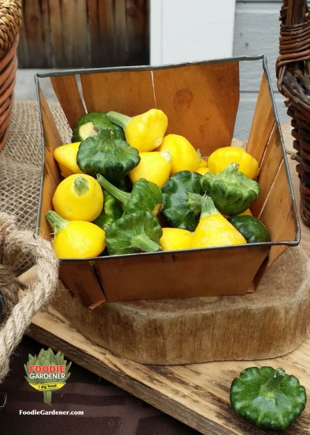 baby-scallop-squash-yellow-green-basket-foodie-gardener-blog