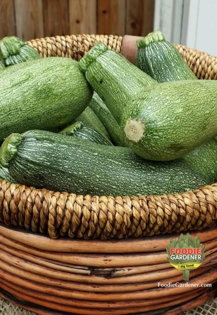 tatuma-squash-melissas-produce-in-basket-foodie-gardener-blog
