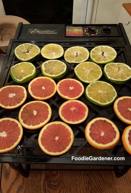 cara-cara-oranges-limes-dehydrating-machine-excalibur-for-holiday-ornaments-by-shirley-bovshow-foodie-gardener