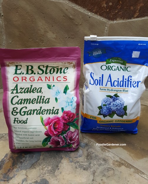 eb-stone-organic-azalea-camellia-gardenia-fertilizer-espoma-organic-soil-acidifier-for-acid-loving-plants-foodie-gardener-blog