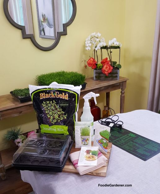 MATERIALS-FOR-GROWING-WHEATGRASS-MICROGREENS-INDOORS-FOODIE-GARDENER