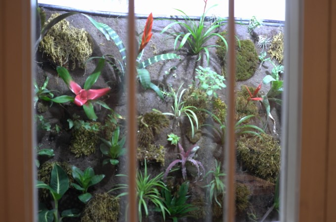 A wall of plants indoors at Bambarol