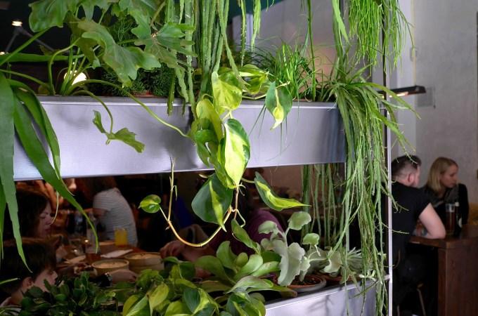 The green at Koku Kitchen