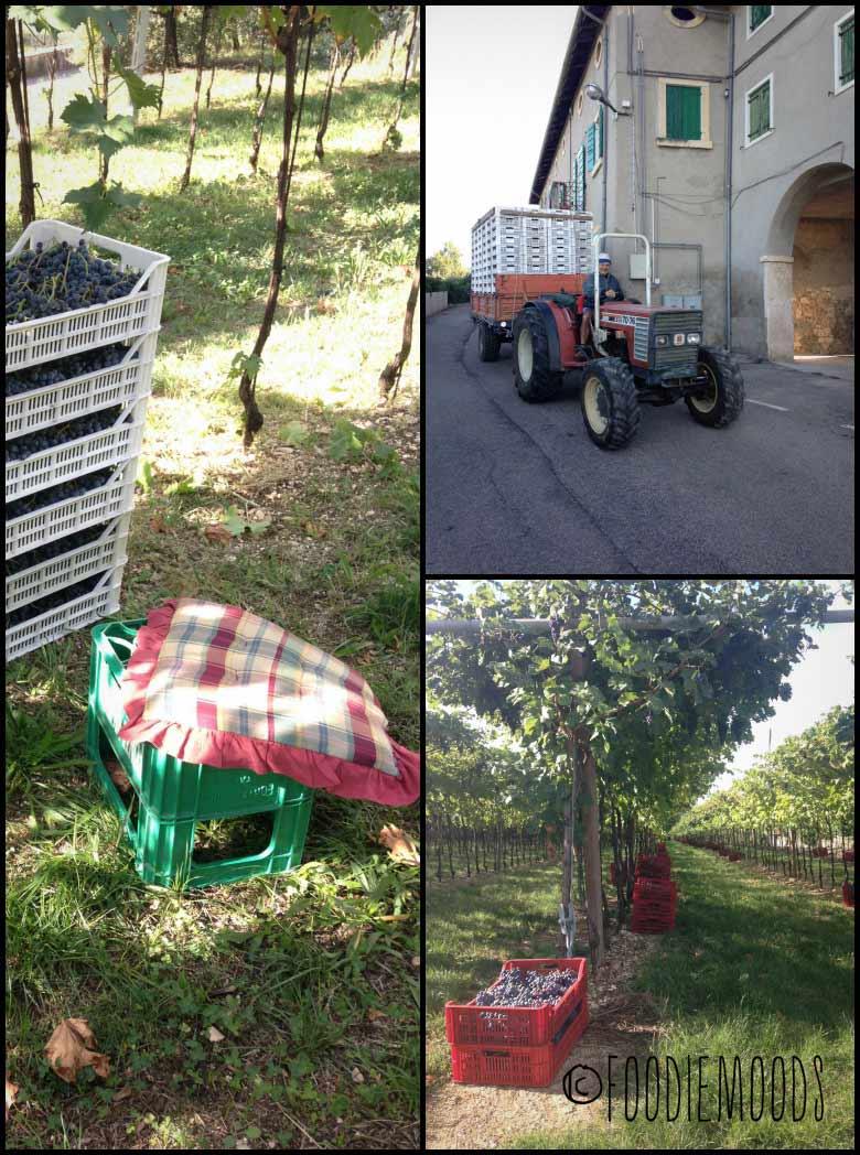 Verona-wijnboeren foodiemoods