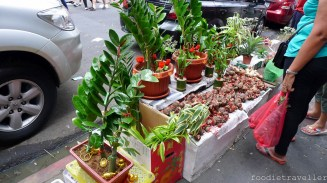 Lucky plants for chinese new year