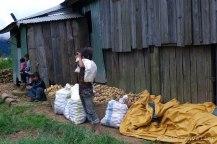 Mt Pulag: Potato Farm