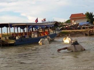 Kompong Phluk: Man with Carabaos