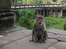 Siem Reap: Angkor Wat - Monkey
