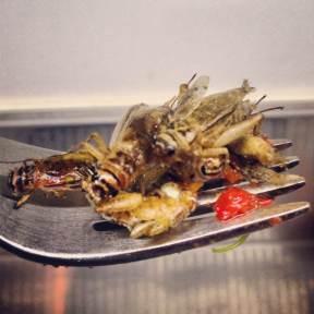 Fried Crickets Joost