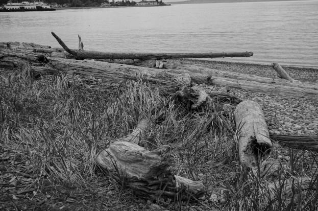Walking among the driftwood