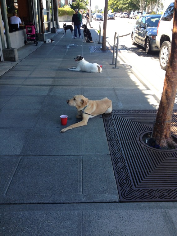 Dogs cooling off, while their owners do the same at cafes and pubs lining Alki Beach