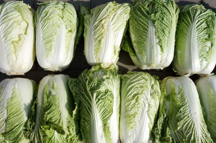 大白菜別直接放地上保存,教你1招保鮮方法