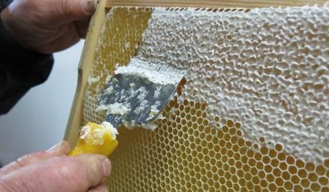 honey-957277_640