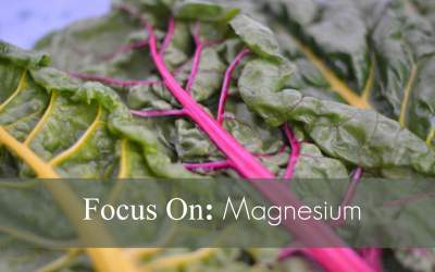 Focus On : Magnesium