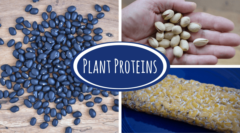 Plant Proteins Your Questions Answered