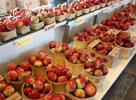Different apple varieties from the Verger Viateur Turcotte & Fils