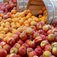 Edible Cities - Stone Fruits, Dianne Jacob, Will Write for Food