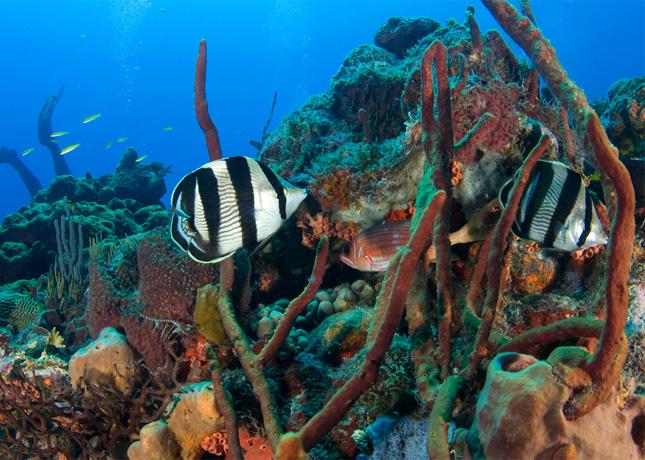 Saba's Marine Life, photo by Marc AuMarc // FoodNouveau.com
