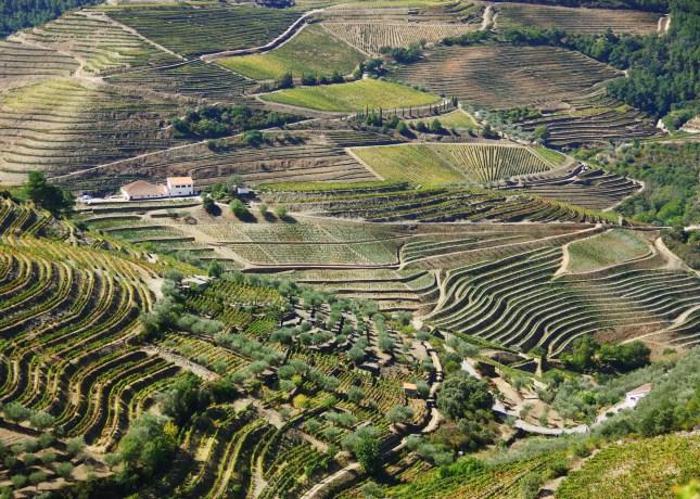 Douro Valley landscape, Portugal // FoodNouveau.com