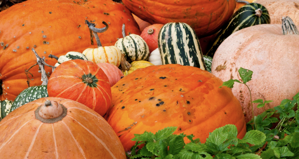 RHS Pumpkins and gourds