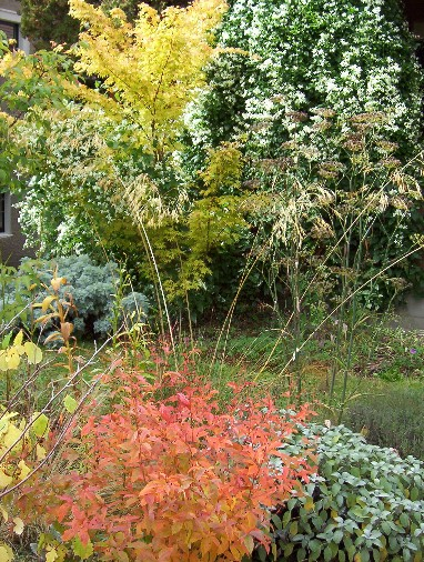 The front yard inOctober
