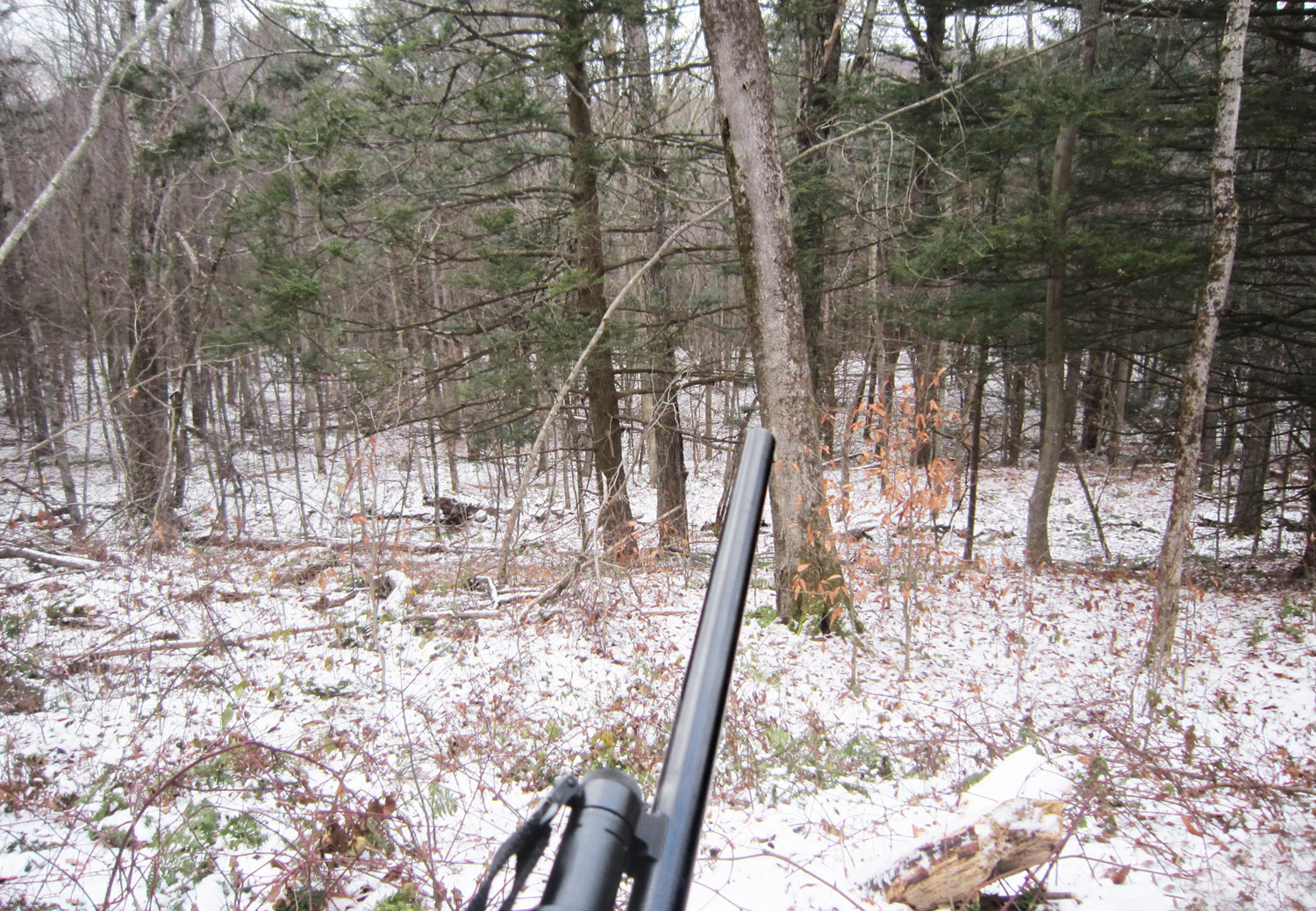 Catskills Mountains - Deer Hunting