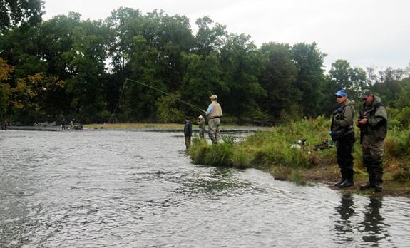 Fishing the Salmon River - Douglaston Salmon Run