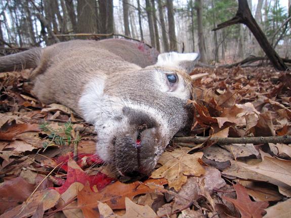 Pulaski - Deer Hunting