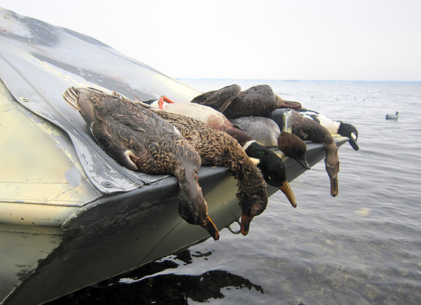 Lake Ontario Duck and Goose Hunting