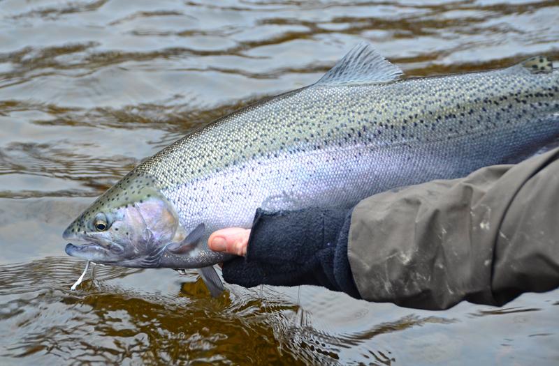 Salmon River - Steelhead Fishing
