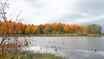 Thousand Islands, NY - Duck Hunting