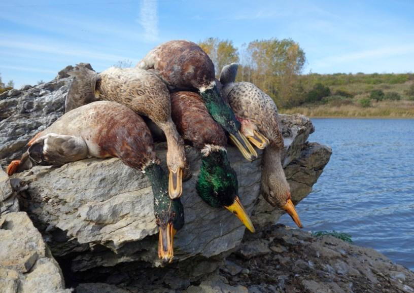 Thousand Islands Region - Duck Hunting
