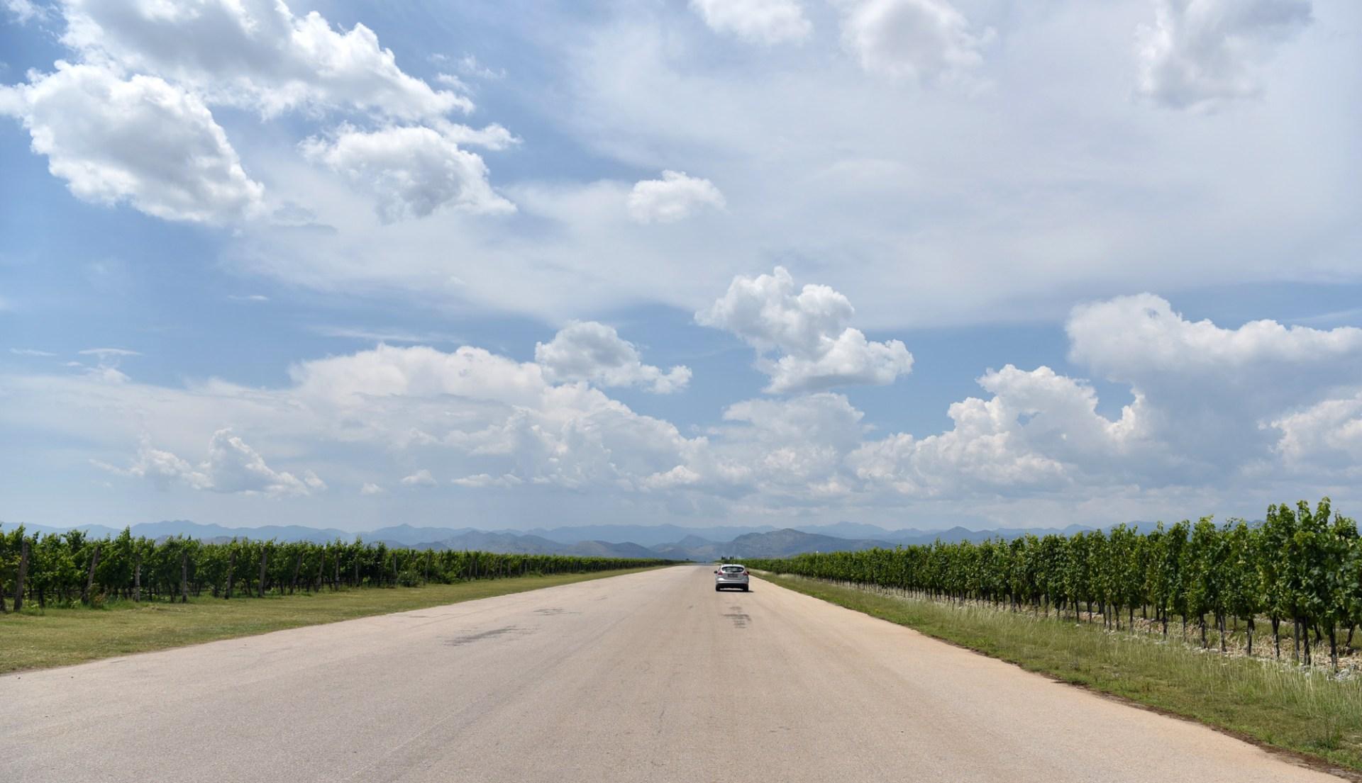 Montenegrin Wine - Plantaže - Ćemovsko Polje Vineyard