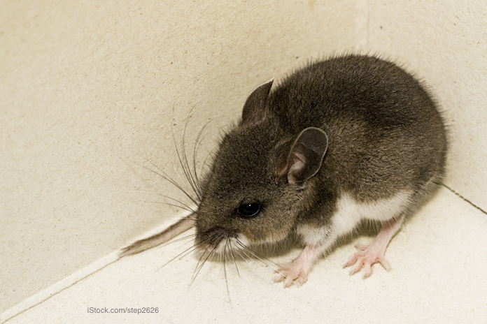 California Warns about Hantavirus After One Person Diagnosed