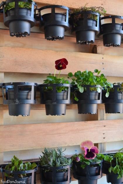 Lazy Mays Cafe Tuggeranong plants