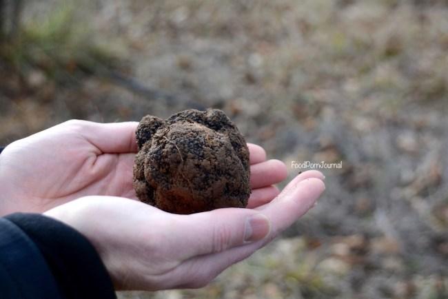 Blue Frog Truffles truffle hunt