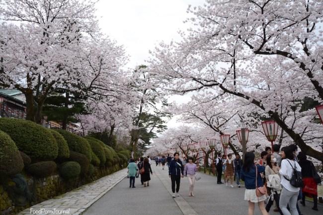 Japan Kanazawa cherry blossoms