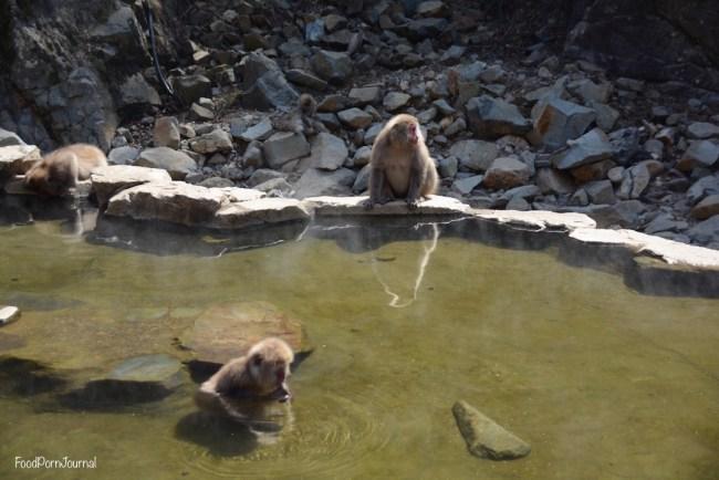 Japan Yamanouchi snow monkeys