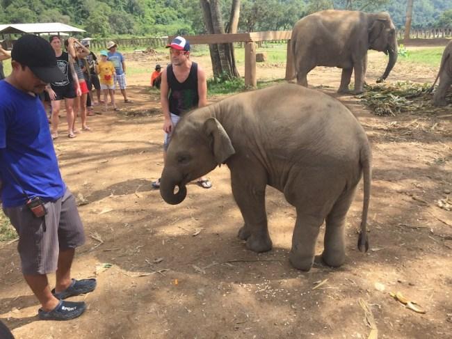 Elephant Nature Park - baby elephant