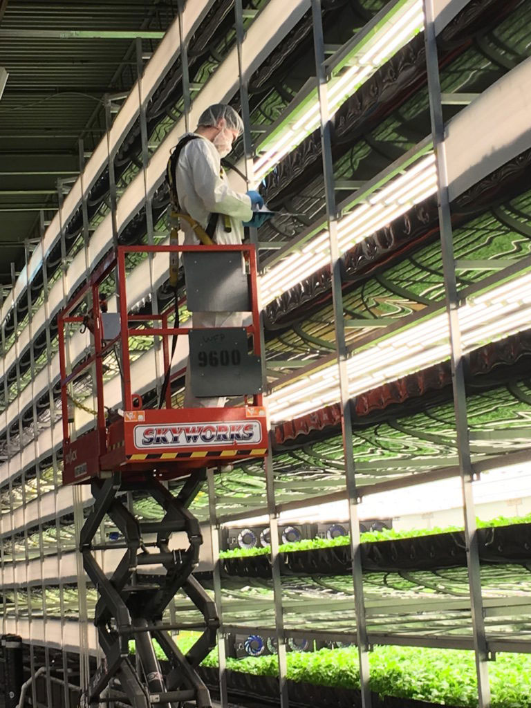 垂直農場旁的採摘者