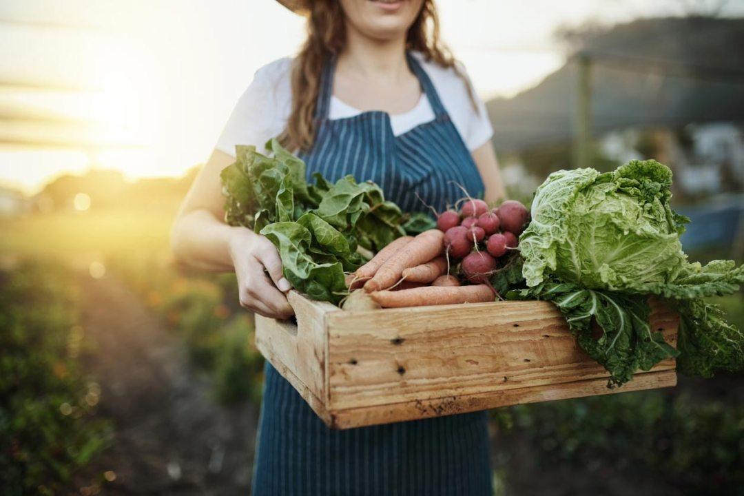 女人攜帶蔬菜收穫盒